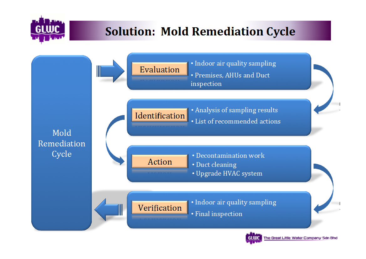 The Following Ilrations Highlight Stages And Elements Of Mold Remediation Procedure