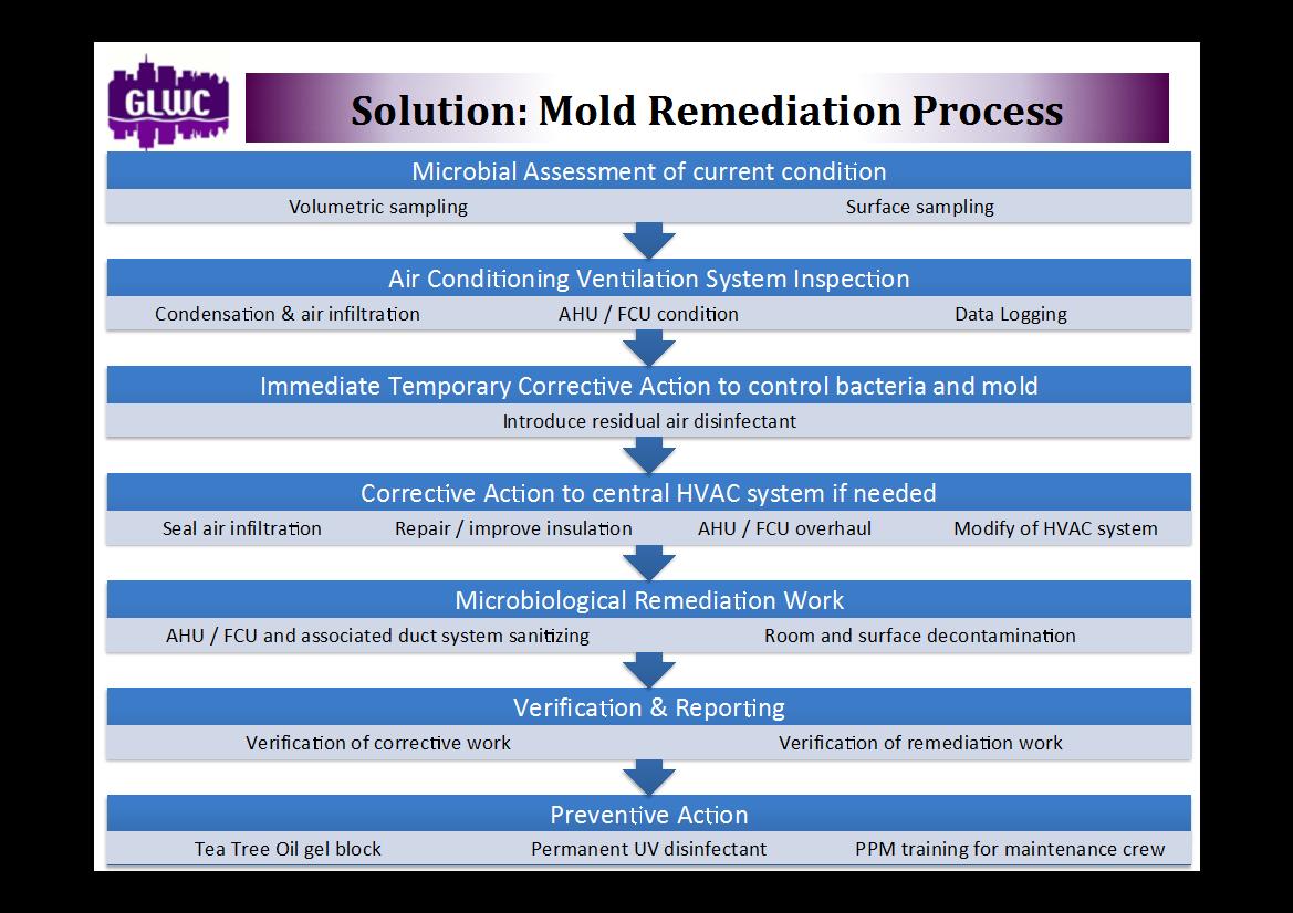 Home Mold Removal Company